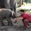 Un cachorro de elefante al que le encantan los abrazos