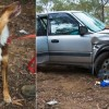 Un perro salva de morir de fro a un hombre tras pasar cuatro das atrapado dentro de su coche despus de sufrir un accidente
