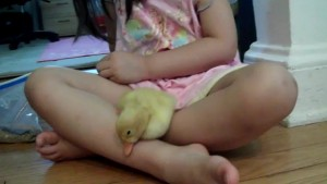 Audrey y su patito Nibble