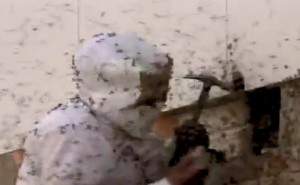 Unas abejas crean una colmena gigante en una casa