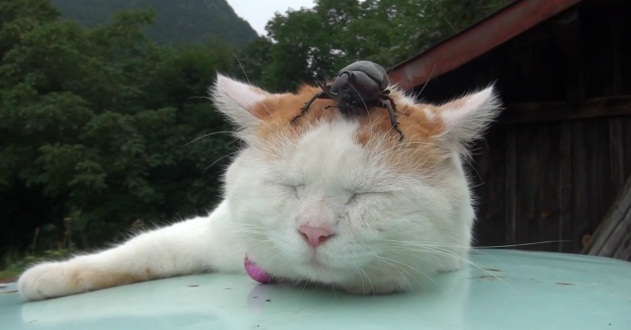 cat and beetles