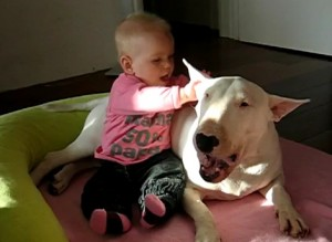 La relacion de un nino con un perro de raza bull terrier