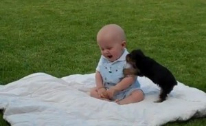 bebe jugando con perro