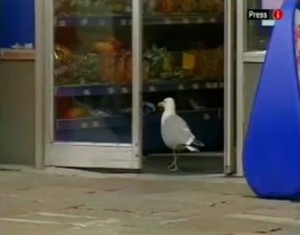 Sam, la gaviota que roba doritos
