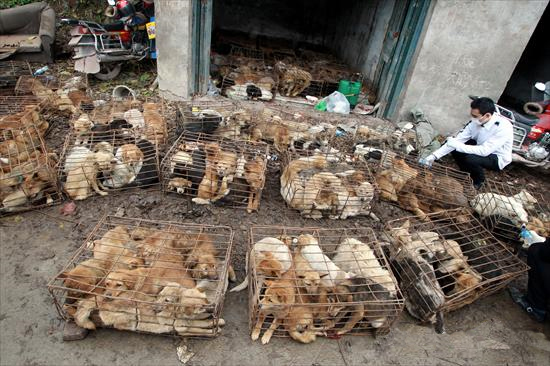 rescate perros china