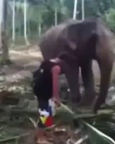 Por que no se debe de molestar a un elefante