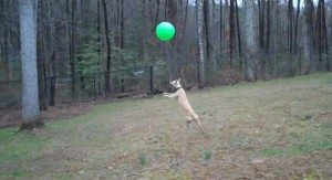 Perro bate su record mientras juega con el balon