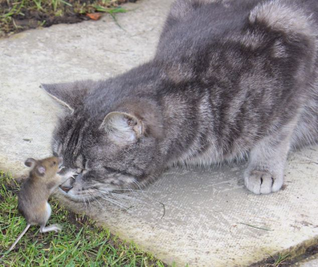 tom y jerry reales