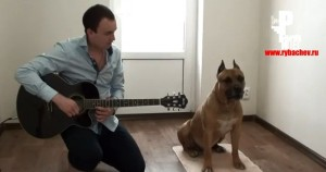 hombre y perro forman grupo musical