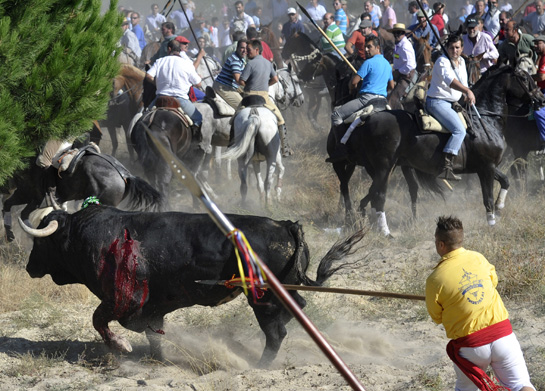 toro de la vega 2011