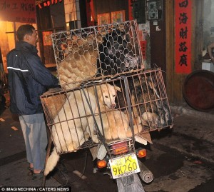 trafico de perros china