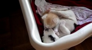 Unos adorables perro y gatito descansan juntos mientras esperan ser adoptados