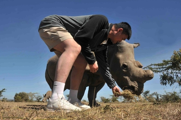 yao ming defiende animales