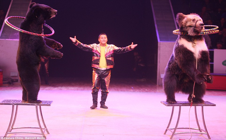 acrobacias con osos china