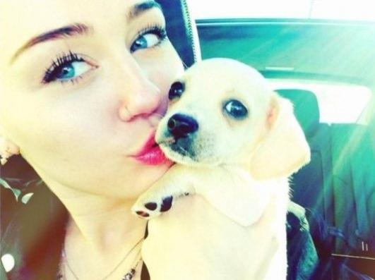 miley-cyrus-adopta-cachorro-bean