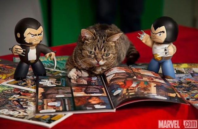 gato-comic-marvel