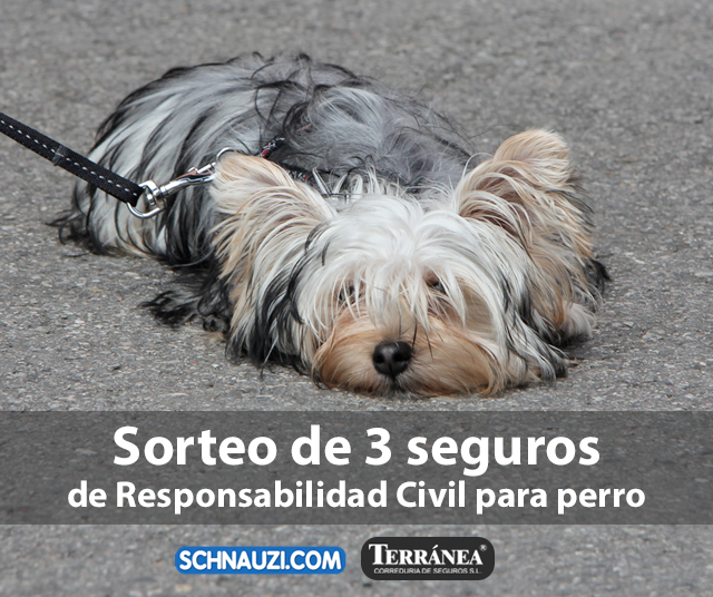 Sorteamos 3 seguros de Responsabilidad Civil para perros