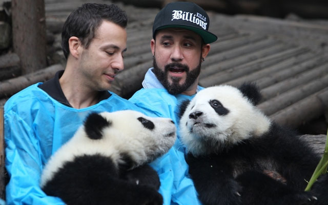 Backstreet-Boys-con-osos-panda