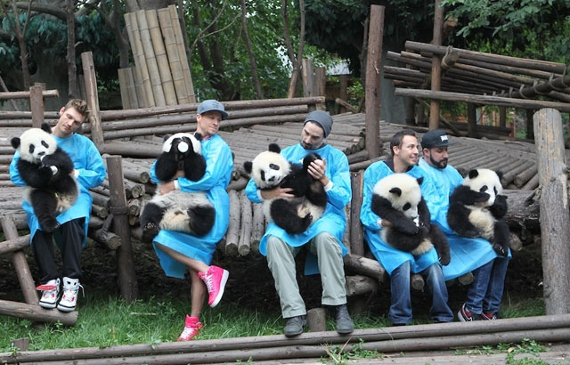 Backstreet-Boys-osos-panda-chengdu-china