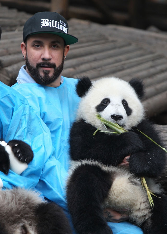 Backstreet-Boys-osos-panda-china