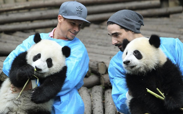 Backstreet-Boys-osos-panda