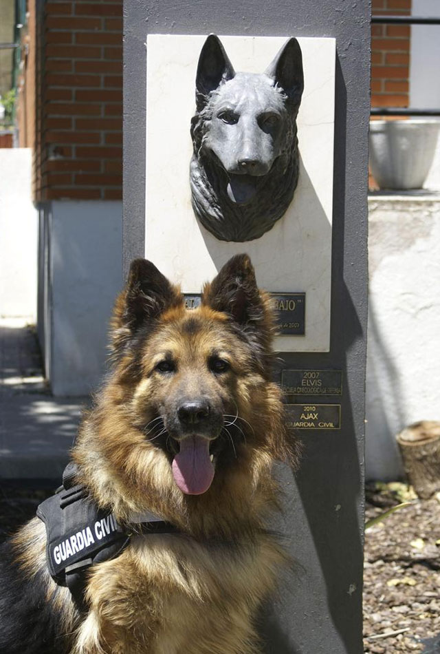 perro-ajax-guardia-civil