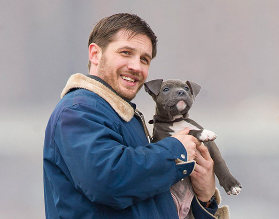 tom hardy con pit bull