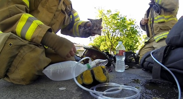 video rescate gatito bombero gopro