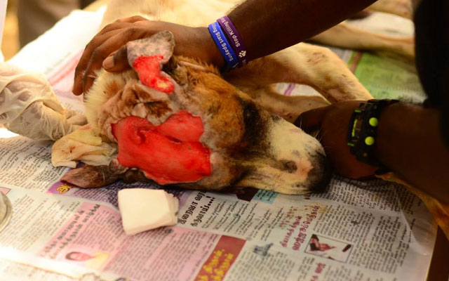 Malaysia-Independent-Animal-Rescue-rescata-perro