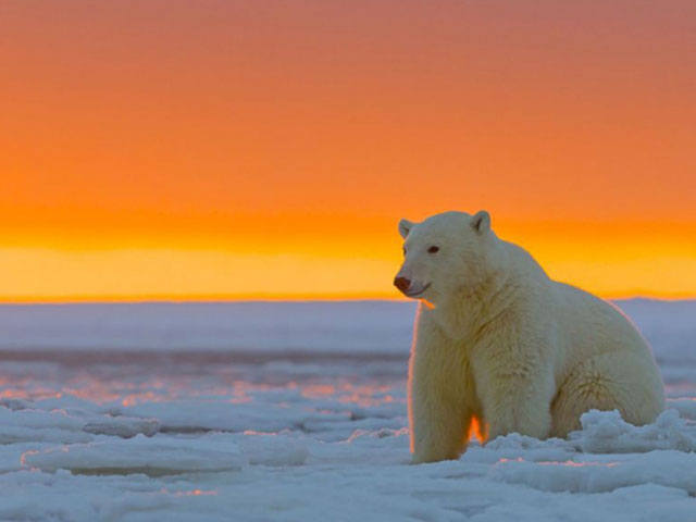 osos-polares-Arctic-National-Wildlife-Refuge