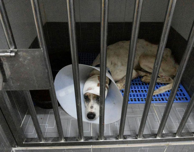 perro-christmas-Malaysia-Independent-Animal-Rescue