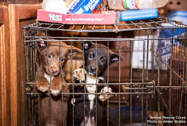 cachorros-salvados-por-Animal-Rescue-Corps