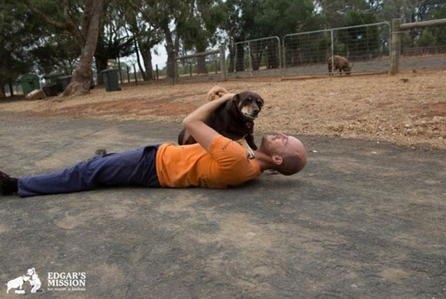 perros-Victorian-animal-sanctuary