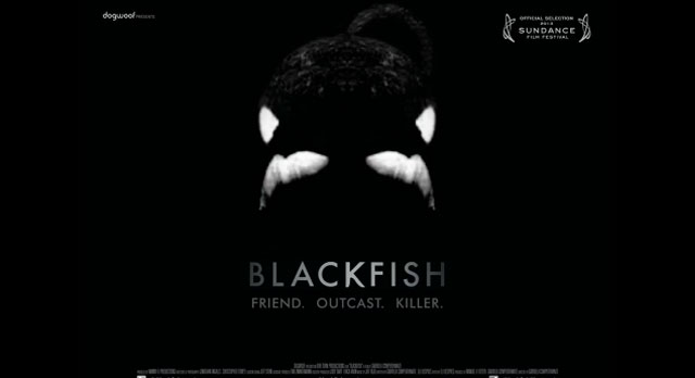 Blackfish-documental-en-espanol