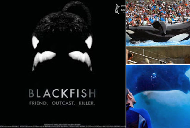 blackfish-documental-completo
