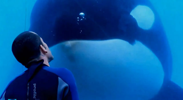 documental-Blackfish-subtitulado
