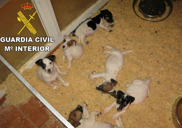 guardia-civil-interviene-71-cachorros-tiendas-barcelona