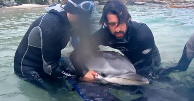 video-rescate-delfin-foz