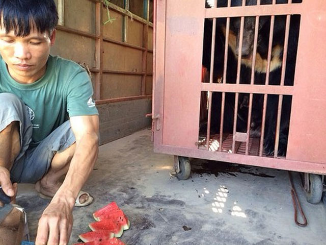 voluntarios-Animals-Asia-alimentan-oso-luna