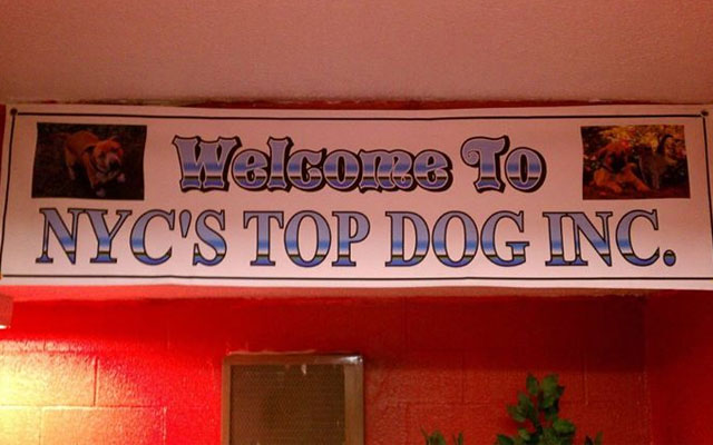 refugio-NYCs-Top-Dog