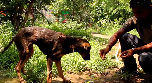 Animal-Aid-Unlimited-perro-alquitran-india