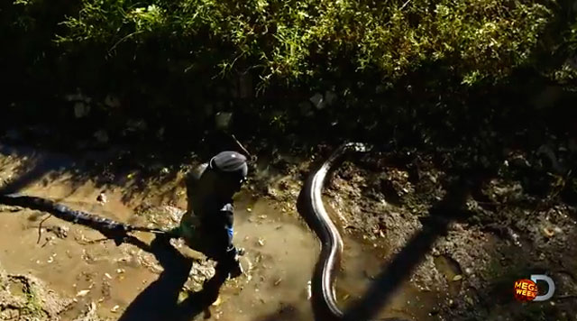 video-serpiente-come-hombre-vivo