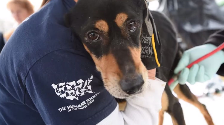 rescate-perros-Sequatchie-Tennessee