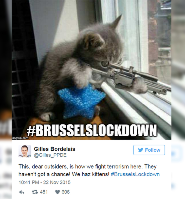 fotos-gatos-BrusselsLockdown-2