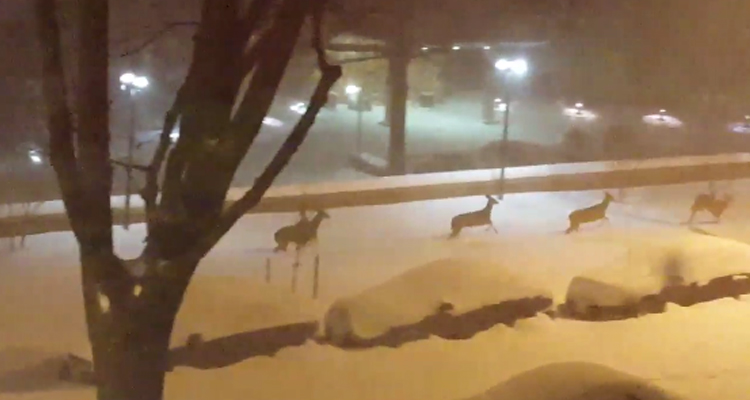 video-ciervos-corren-nieve-washington