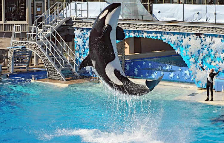 Sea World acaba con los espectaculos con orcas