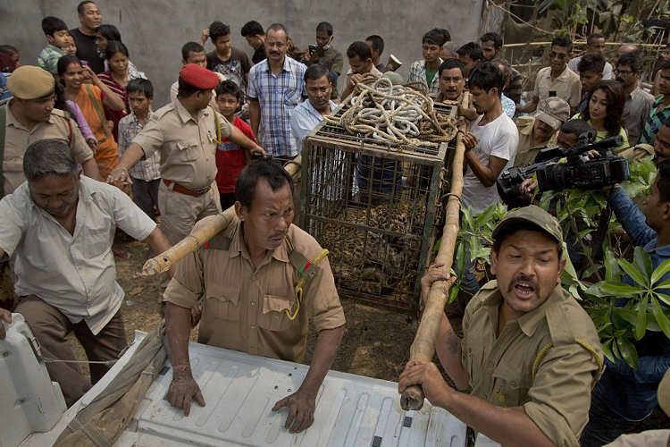 rescate leopardo pozo india