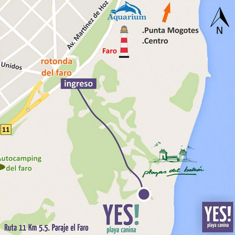 yes-playa-canina-mar-del-plata-argentina