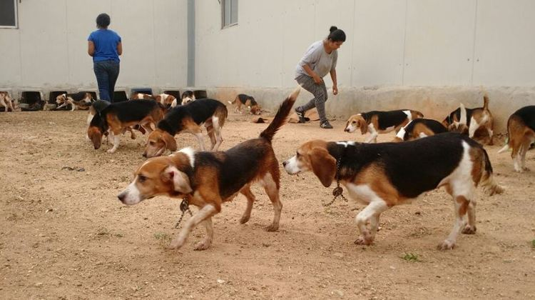 rescate perros laboratorio india