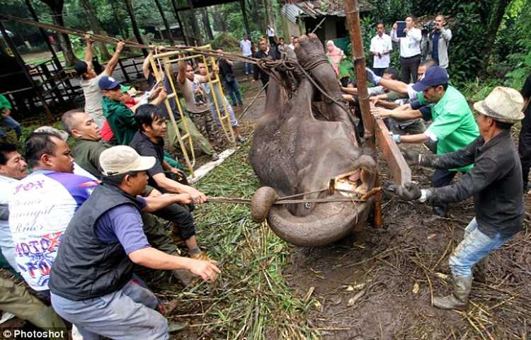 yani elefante zoo indonesia